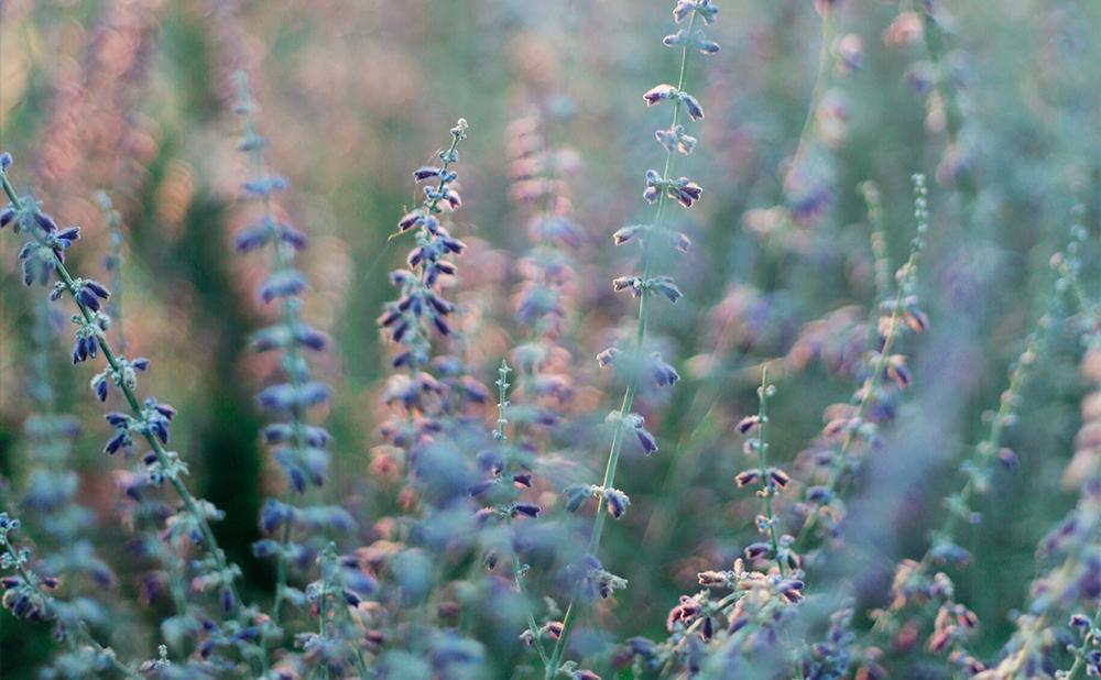 Växter - perenn