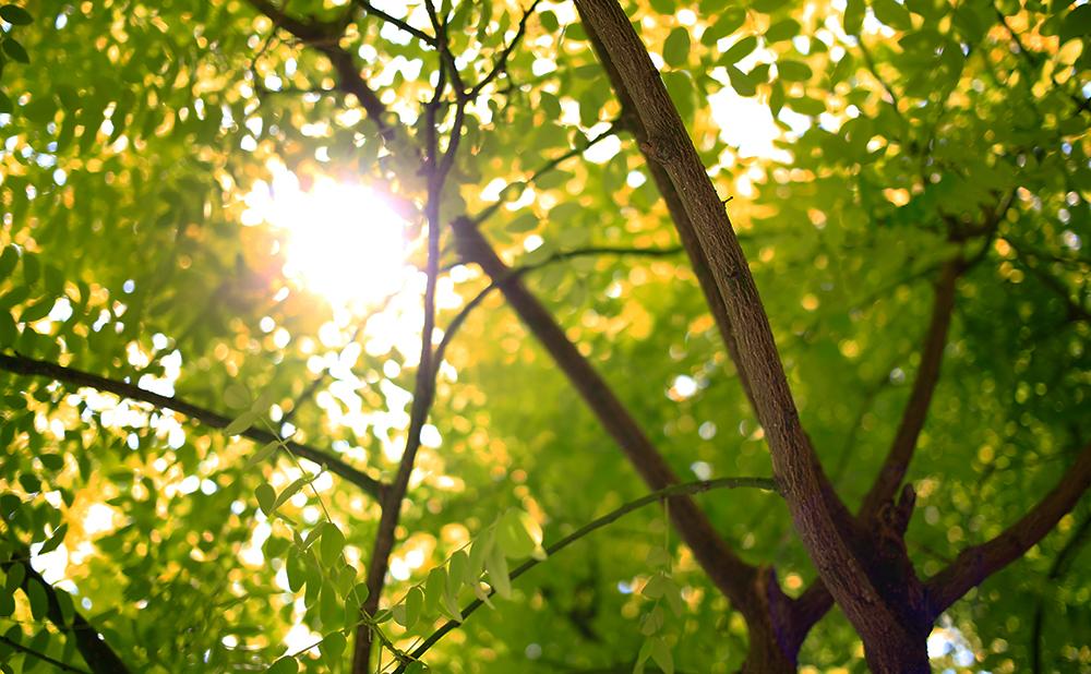Växter - träd